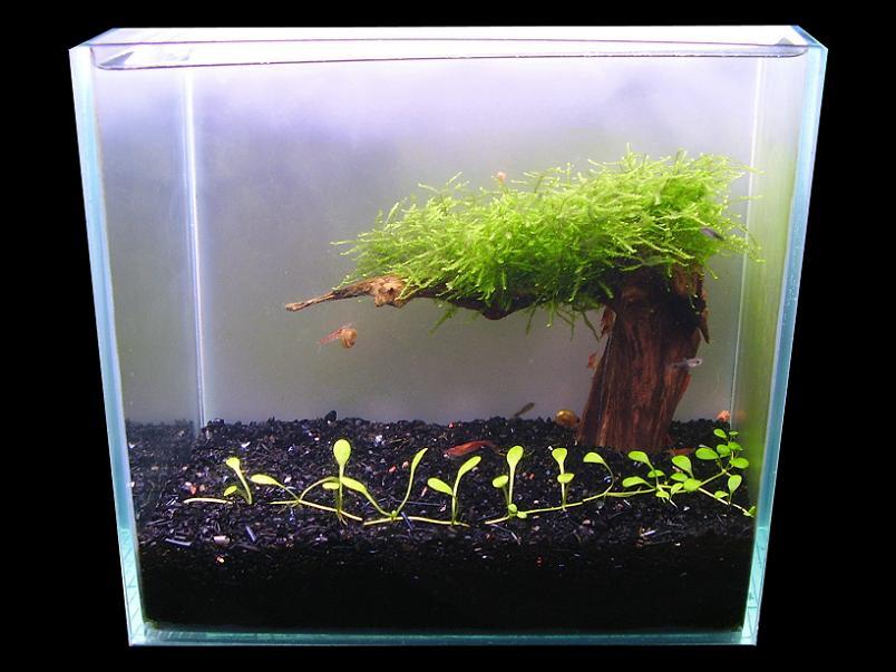 Когда можно сажать растения в аквариум 534
